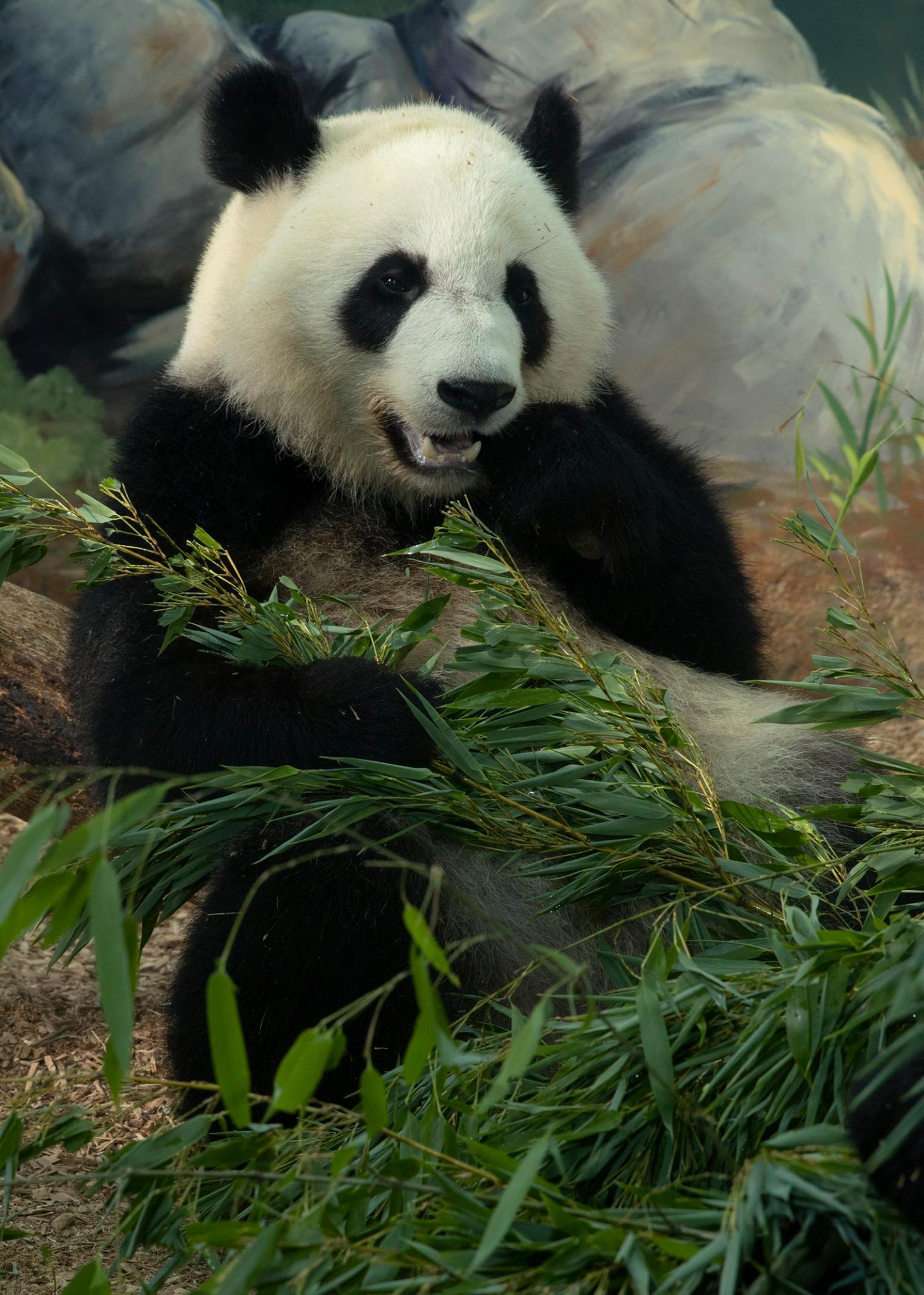 Image: Zoo Atlanta/Facebook